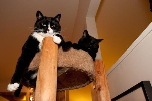 Bailey and Finney in the cat tree