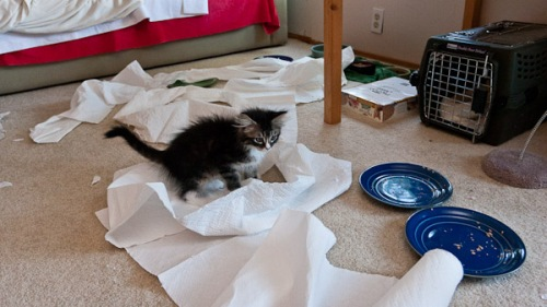 Cats and Paper Towels